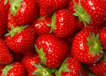 fraises_cidrerie_lariviere